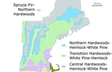 New england forested regions.