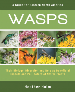 """Wasps"" book cover."