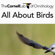 Cornell Lab of Ornithology logo.